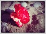 carnationsonthebeach